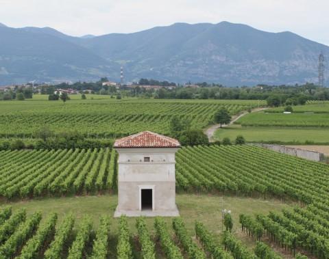 vingårde i norditalien