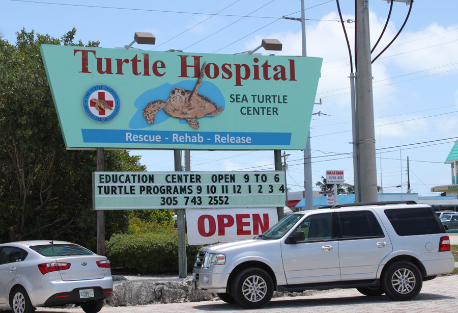 Havskildpadde hospital Marathon