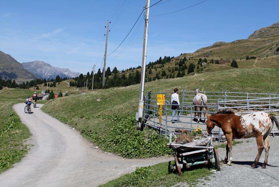 Østlige Schweiz-Alp Flix Agritourismus