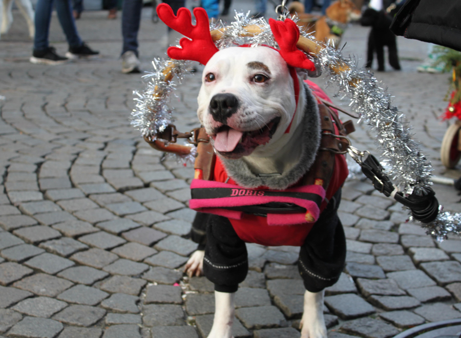 Et Luciaoptog med de hjemløses hunde